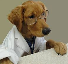 The Veterinarian Rule: In California – Not A Bar to Common Law Strict Liability